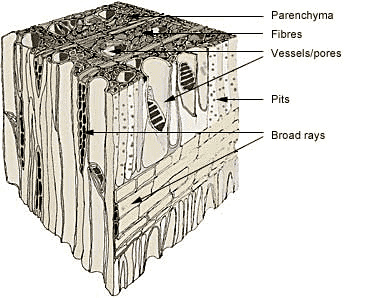 hardwood material science for furniture smes and designers wood structure diagram #7